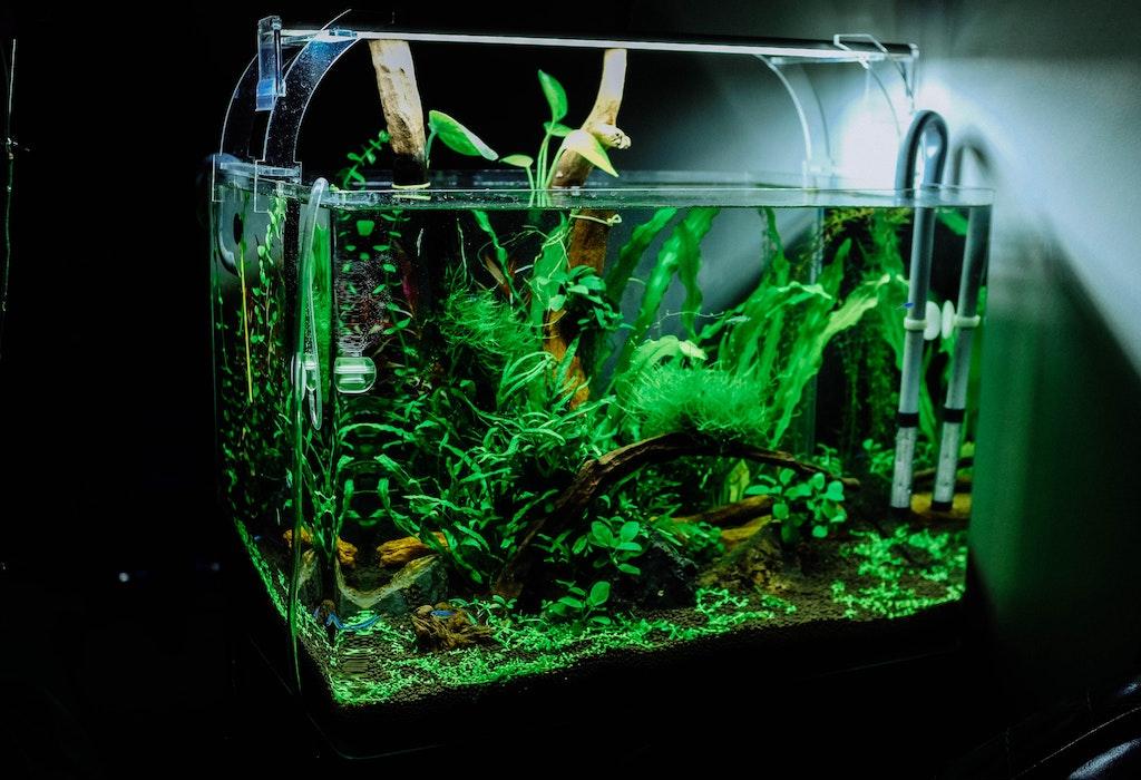 Proizvodstvo akvariumov
